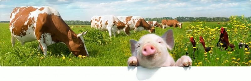 РФ в I квартале увеличила сельхозпроизводство на 0,7%