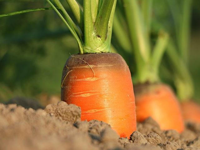 Подписан закон об улучшенной сельхозпродукции